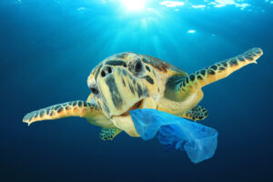 Turtle with plastic bag in his mouth